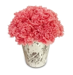 Carnation Cup