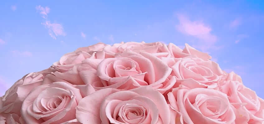 bouquet of long lasting pink roses with the sky in the background