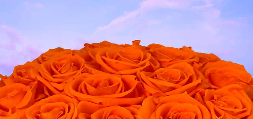 a bouquet of long lasting orange roses with sky in the background
